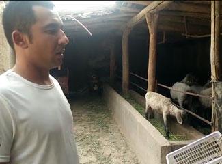 艾买尔向大家介绍他家养羊的情况