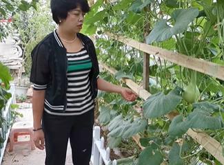 祖然木古丽在介绍自己家的葫芦