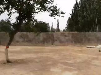 图拉江大哥家的院子很大