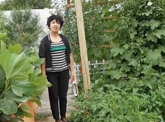 祖然木古丽介绍自己家的茄子等蔬菜