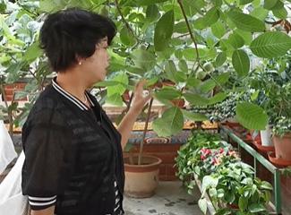 祖然木古丽介绍自己家的核桃树