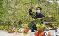 在新疆,别样的春节一样的坚守