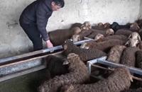 新技术提高新疆阿勒泰冬季羊羔成活率 已完成冬羔生产30余万只