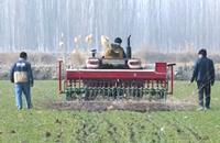 新疆冬小麦陆续返青 农民田间追肥忙