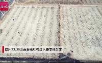巴州23.38万亩若羌红枣进入春季修剪季