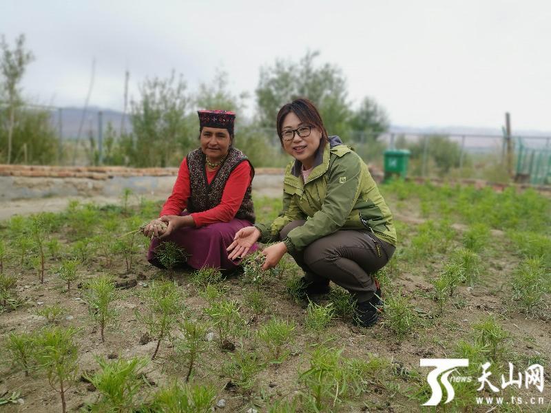 新疆6人7单位当选全国三八红旗手、三八红旗集体