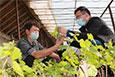 种植大棚红提葡萄助村民增收