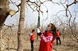 志愿服务队助农丰产增收