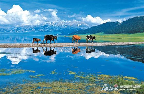 【新疆是个好地方】来一场说走就走的踏春之旅