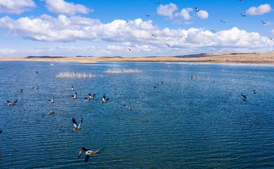 新疆博斯腾湖:水清景美鸟蹁跹