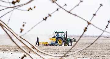 昌吉州:200万亩棉花开播