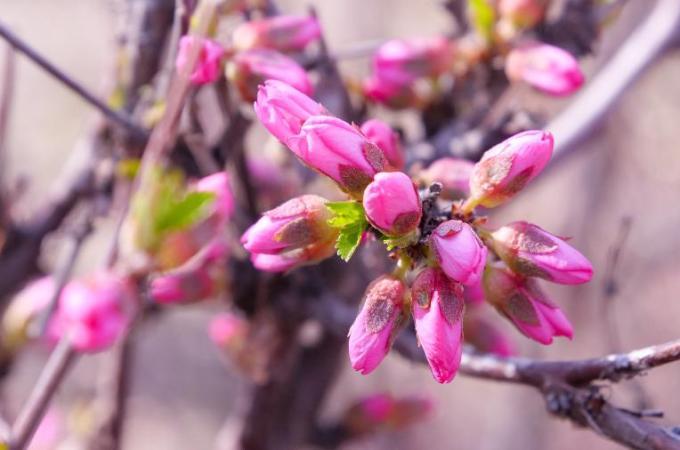 新疆霍尔果斯:风和日暖来赏春