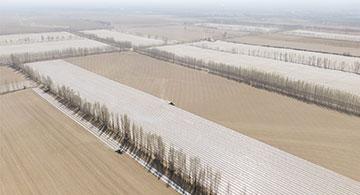 博乐市:45万亩棉花开播