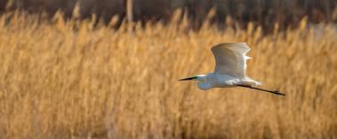克拉玛依:古海生态公园成鸟类乐园