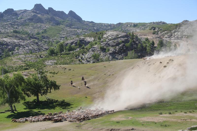 这里是新疆 | 夏季来临 哈萨克族牧民迎来转场季