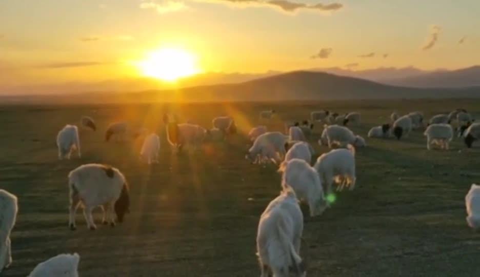 这里是新疆 夕阳下的巴音布鲁克草原巴西里克村羊群