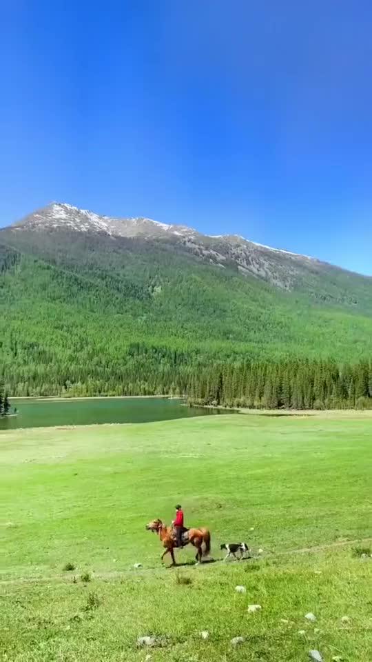 这里是新疆   漫步新疆原始森林