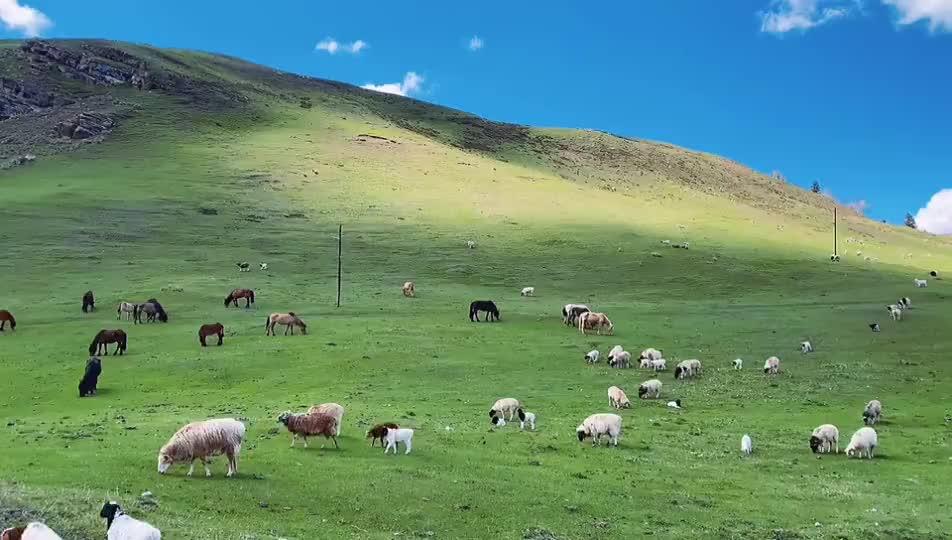 这里是新疆   仙境巩乃斯