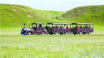 坐小火车游湿地公园