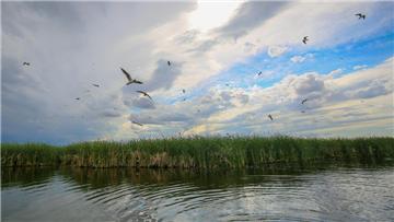 呼图壁:湿地生态美 众鸟来栖息