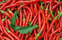 谢广洲:小辣椒撑起大产业