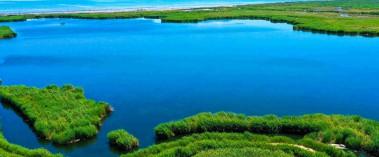 河道蜿蜒 綠葦叢叢
