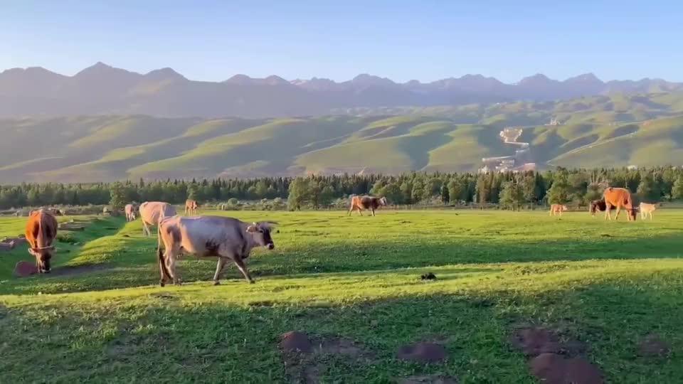 这里是新疆丨放牧