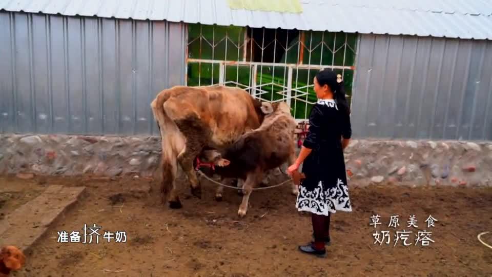 这里是新疆丨草原美食 奶疙瘩