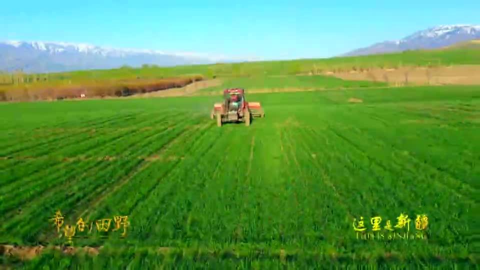 这里是新疆丨希望的田野