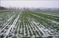 新疆:科技助力 保质保量播种冬小麦